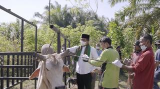 Idul Adha 1442 H,Pemkab Pelalawan Sembelih 11 Ekor Sapi Kurban