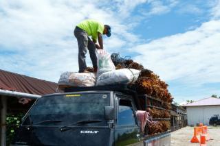 Alhamdulillah Harga Sawit Naik Riau Lagi Jadi Rp2.297,14 per Kg