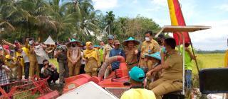 Pj Bupati Kuansing Panen Raya Perdana Padi Sawah di Tebarau Panjang