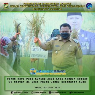 Bupati Kampar, Jadikan Padi Kuning Kampar Varietas Unggul Nasional.