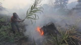 15 Desa Ikut Antisipasi Karhutla di Riau, Lahan Gambut Jadi Perhatian Khusus